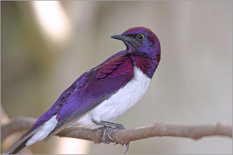 http://sd-2.archive-host.com/membres/images/80030918250460808/deco/oiseau_exotique_3.jpg