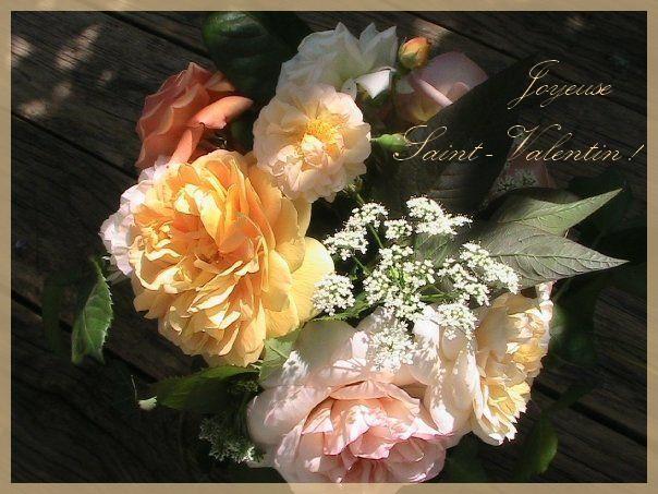 Roses et Angélique