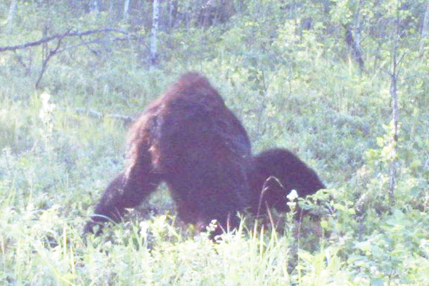 Bigfoot, photo et Alberta… Big-foot