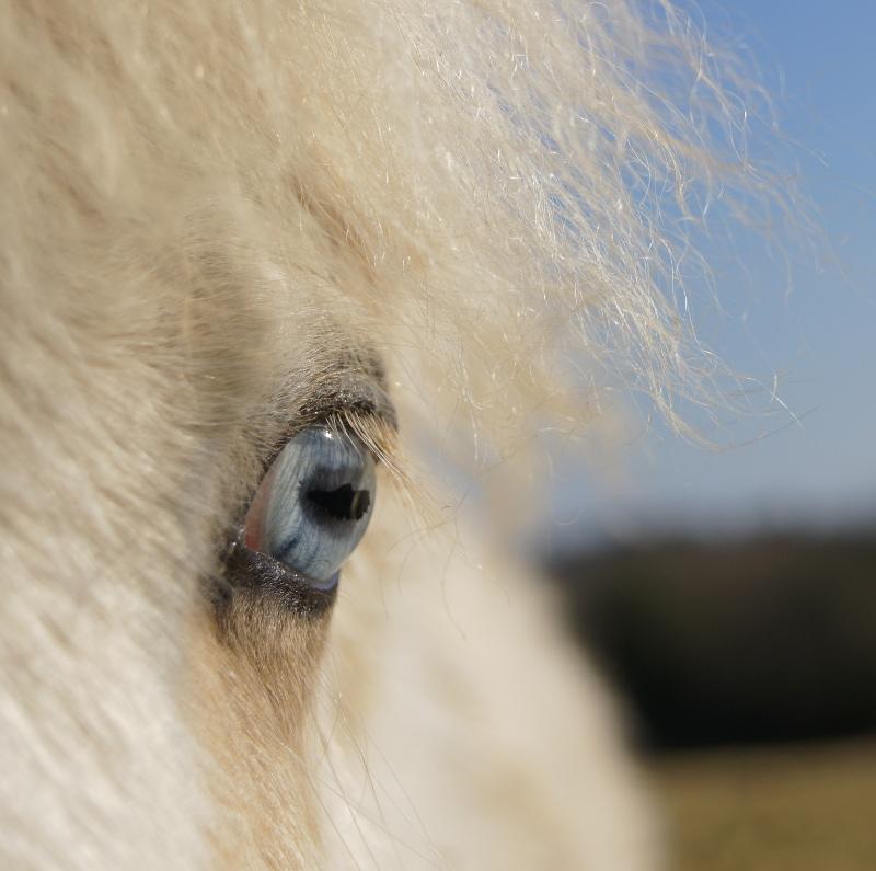CONCOURS PHOTOS, L'oeil des chevaux ! DSC00708