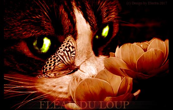 Electra's Light [Fermé] Signa_Loupiot_txtcadre