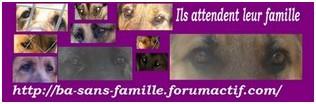 Newsletter n° 23 Basfbanniere