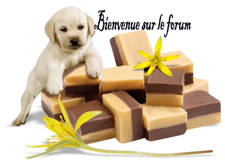 Le bébé chien et le chocolat  Bienvenue1chien